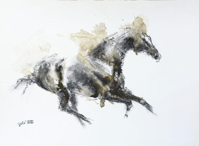 Equine Nude 77t